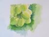 Les raisins verts