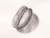 «Un grain de café», graphite, 2011