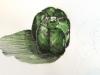 «Un poivron», encre et aquarelle, 2012